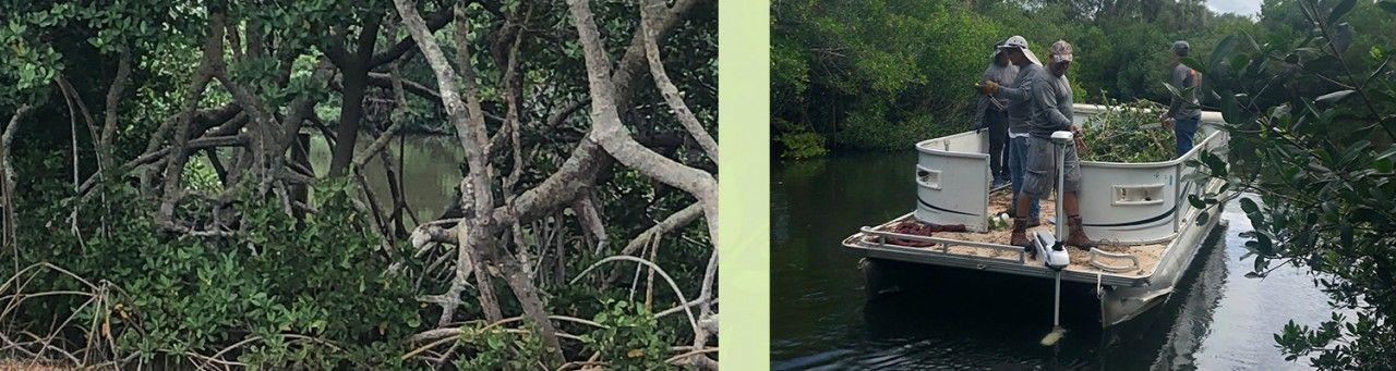 Mangrove-blog-2